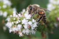 bee fleur bl
